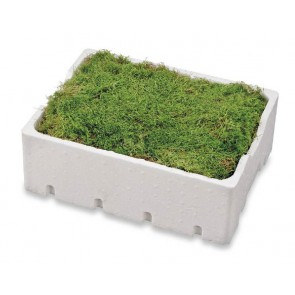 Fresh moss - 4 layers