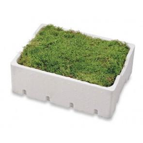 Fresh moss - 4 layers